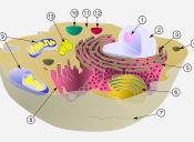 PSU Ciencias Técnico Profesional:  orden de estructuras en el ADN