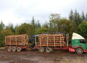 10 signos que indican que deberías estudiar: Ingeniería Forestal
