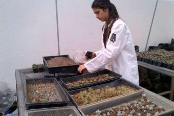 Puntaje de corte: Agronomía 2016