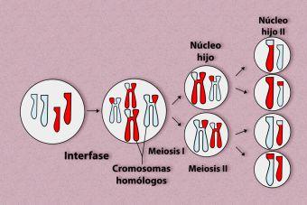7 claves para preparar la PSU de Ciencias