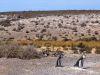 Puerto Madryn y su increíble reserva natural