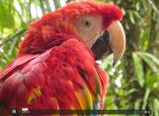 Video: Descubriendo los animales de Sudamérica y nadando en Galápagos