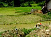 Recorriendo Laos: una prueba personal (Parte 2)
