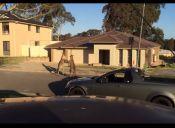 Videos: Canguros peleando en las calles de un suburbio de Australia
