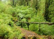 Recorriendo Chile: Parque Nacional Alerce Andino