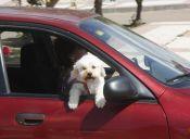 7 destinos para viajar con perro en Argentina