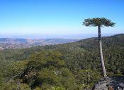 Recorriendo Chile: Parque Nacional Nahuelbuta, encanto de cordillera y mar