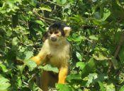 Mochileros por Sudamérica: Aventura en la Selva, Rurrenabaque, Bolivia