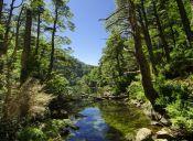 Los 5 mejores senderos de trekking de la IX región
