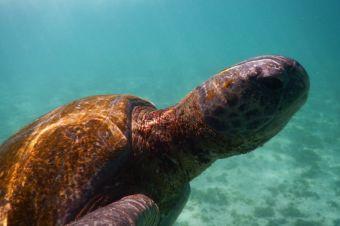 Nadando con tortugas marinas en Islas Galápagos