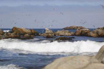 Vacaciona Caleta: Sernatur lanza campaña para promover el turismo en caletas de pescadores