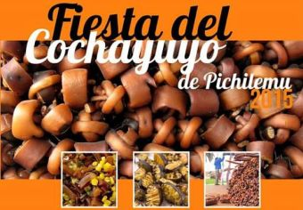 Fiesta del Cochayuyo 2015 de Pichilemu