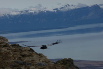 ¿Qué hacer en Puerto Natales?