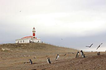 Recorriendo Chile: Isla Magdalena, Estrecho de Magallanes