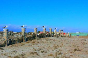 Recorriendo Chile: Punta de Choros