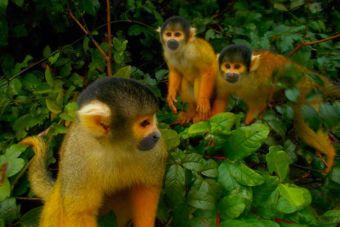 Mochileros por Sudamérica: Inmersos en la selva boliviana