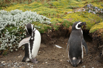 7 motivos por los que amo Punta Arenas