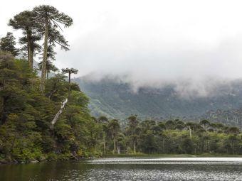 Recorriendo Chile: Parque Nacional Tolhuaca