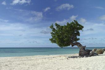 Qué hacer en Aruba, playas del caribe y más