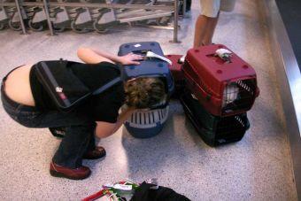 Tips de viajero: 8 tips para viajar en avión con tu mascota dentro de Chile