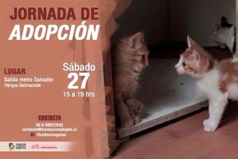 Jornada de Adopción de Fundación Adopta