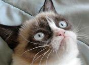 Los 8 gatos más populares de Internet