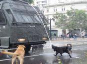 Perros callejeros: los otros protagonistas de las manifestaciones