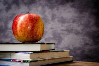 15 señales de que lo tuyo es la pedagogía