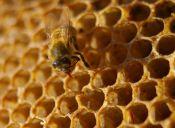Con la miel puedes mejorar tu estado físico al correr