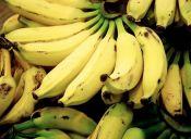 Frutas que te ayudarán a entrenar: el plátano