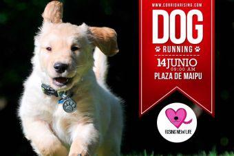 Dog Running corrida por el rescate animal - 14 de junio 2015
