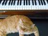 12 canciones para subirte el ánimo mientras trabajas en la tesis