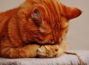 16 expresiones de los gatos sin estrés universitario