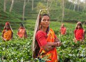 7 sitios web para conocer el mundo de la antropología