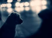 Flora y fauna universitaria: La compañera que recoge animales de la calle