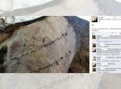 Estudiante de veterinaria arriesga expulsión por escribir