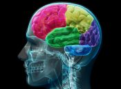 Estudio: ¿Somos cada vez menos inteligentes?