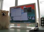 Mascotas en el trabajo ¿buena idea?