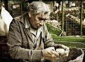 Estudio muestra que chilenos trabajan hasta los 70 años y reciben baja pensión