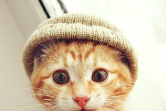 ¿Ansiedad? ¿Estrés? los videos de gatos pueden ayudarte