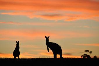 12 razones para hacer un postgrado en Australia
