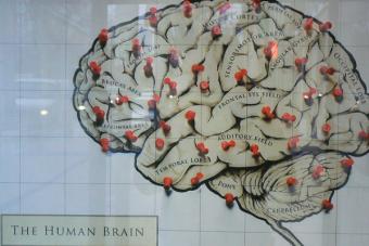 ¿Cómo adaptar tu cerebro para lograr el éxito?