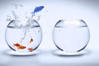 ¡Tu emprendimiento no funciona! ¿Y si en vez de competir optas por innovar?