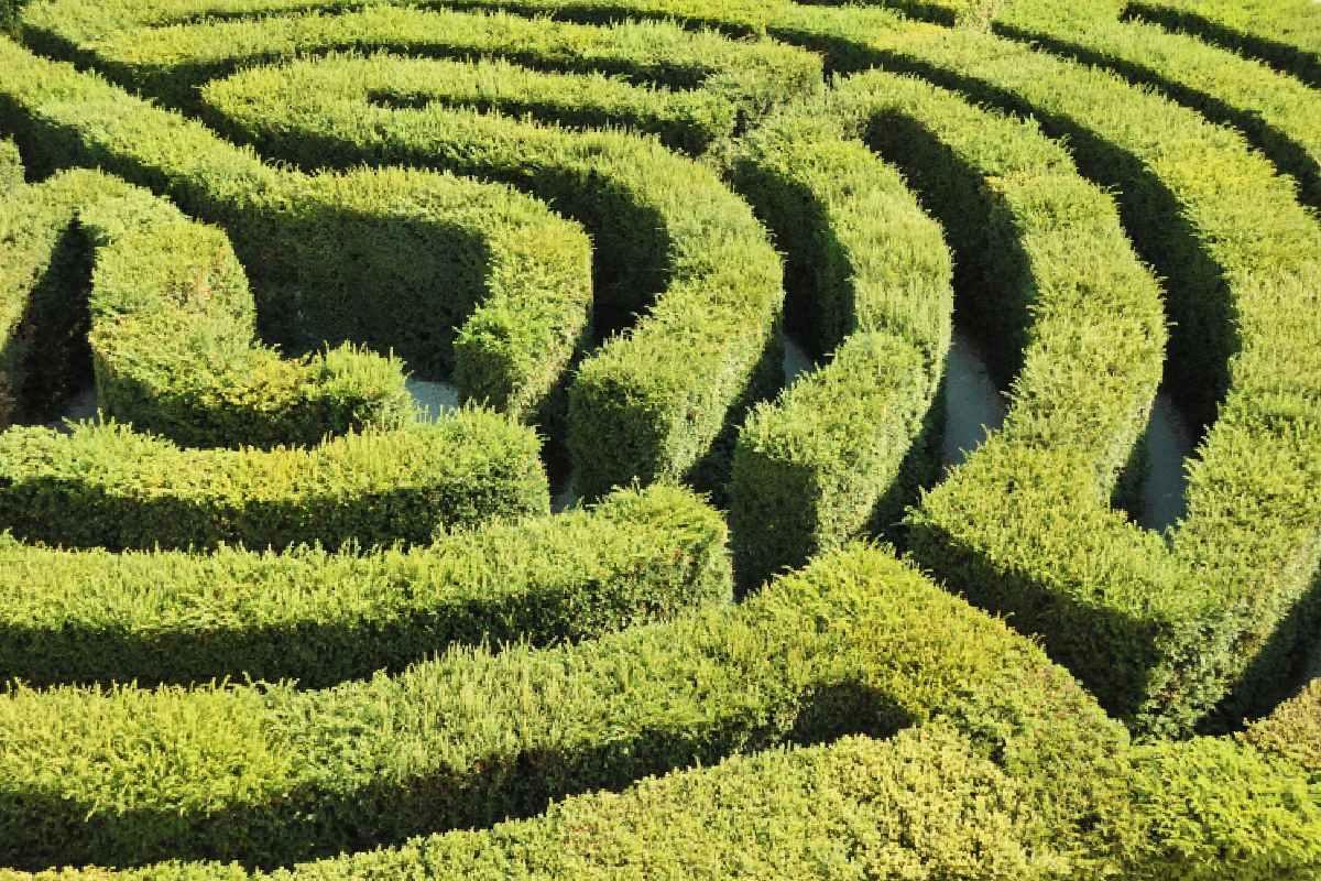 Green Hedge Maze