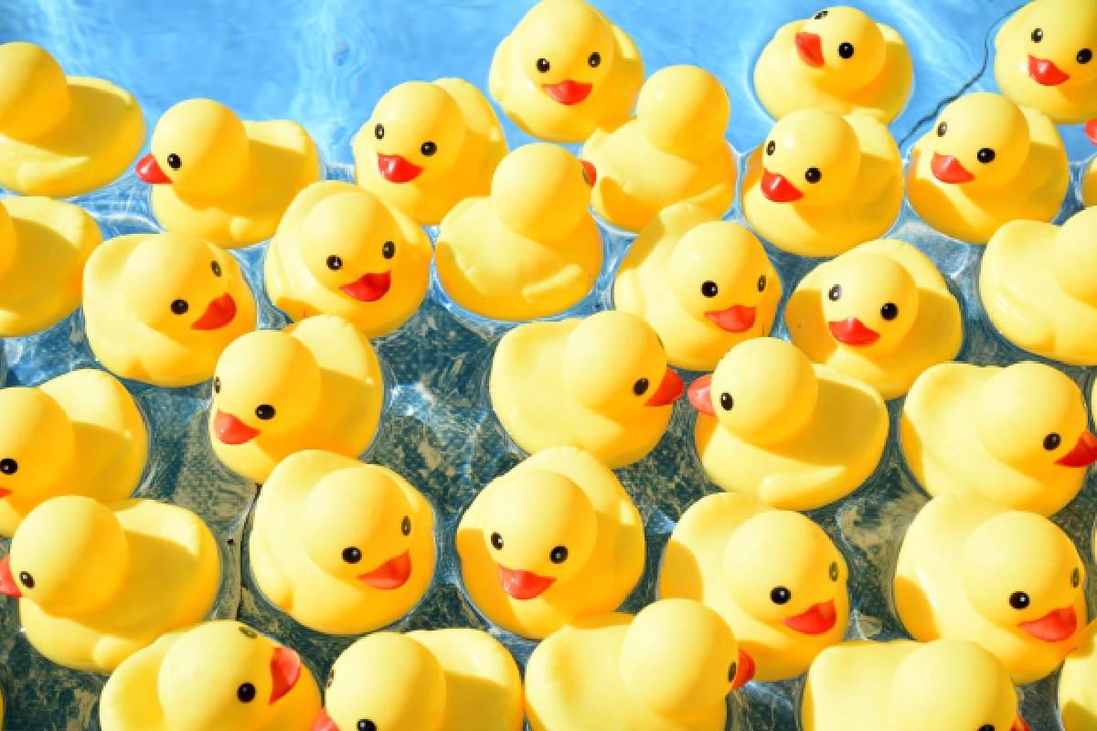 Rubber Duck floating in water