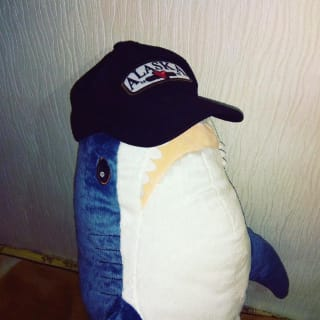 Sharkcoder profile picture