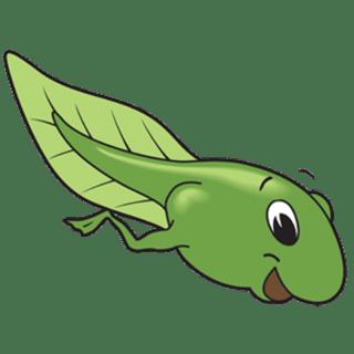 tadpole256 profile