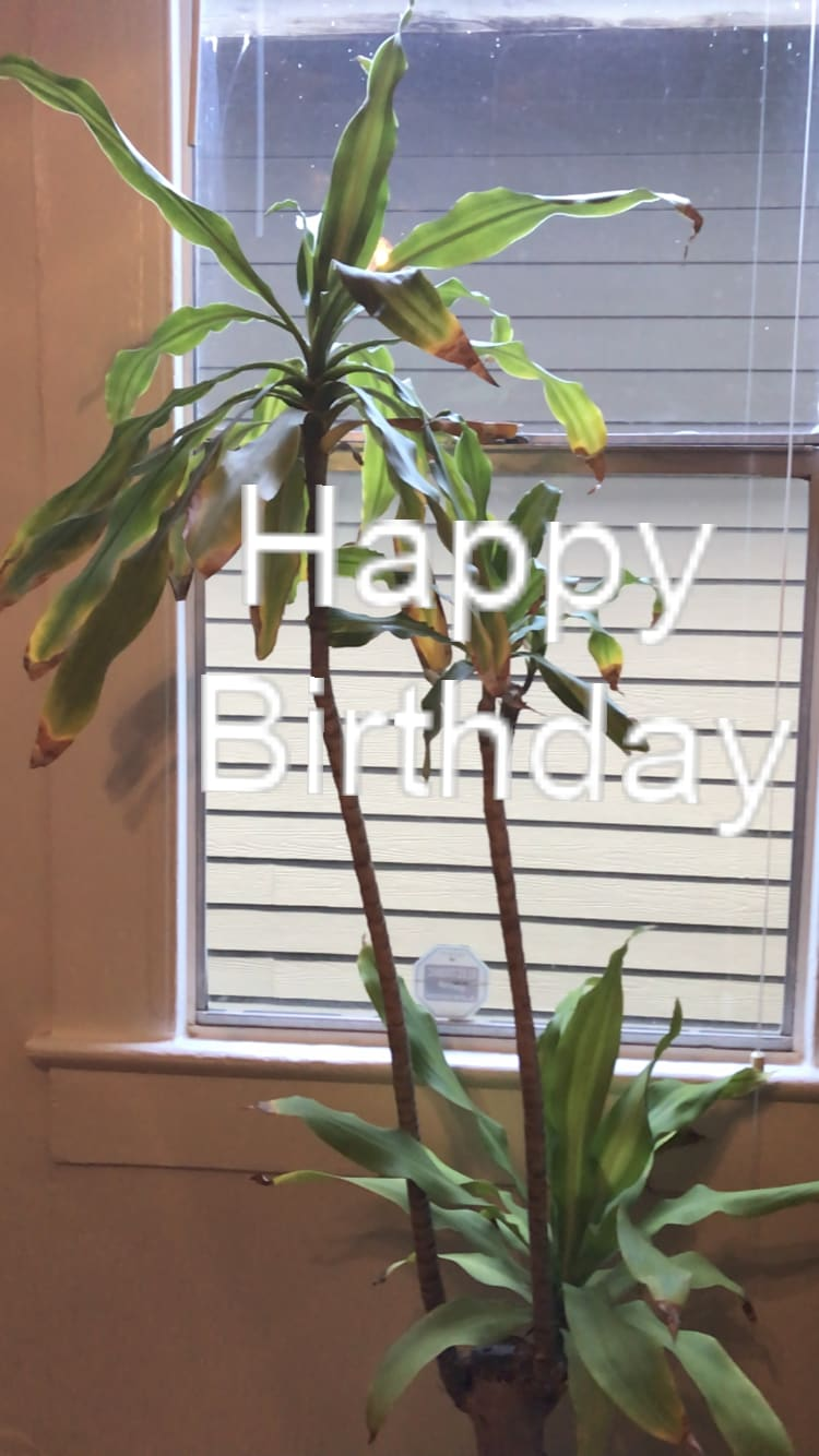 Happy Birthday text in front of a plant