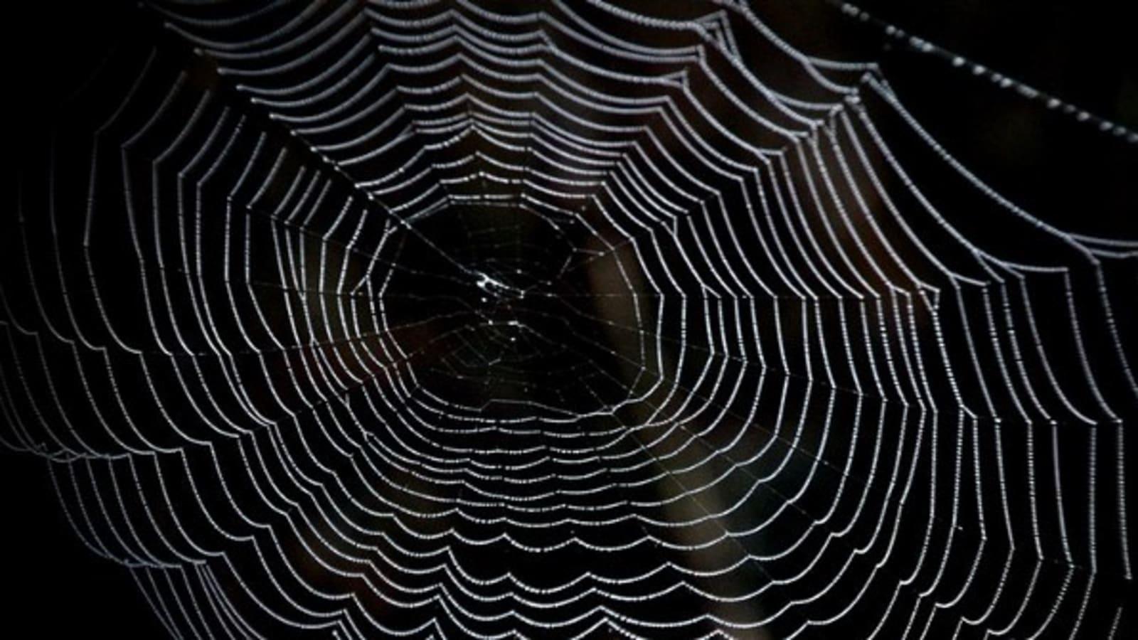 The Deep Dark Web Dev