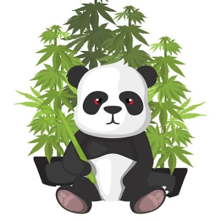 hi panda profile picture